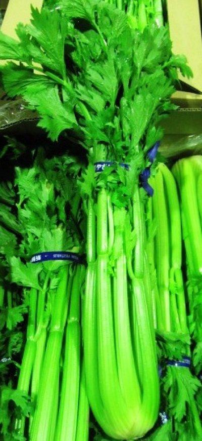 画像1: 特別セール商品★【新鮮野菜】★沖縄産 セロリ1束 約700g〜1kg 20束 限定