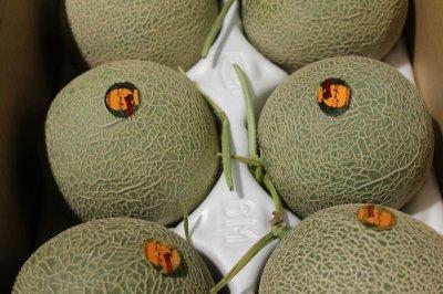 画像1: 沖縄県 宮古島産 メロン 1個 (1.2〜1.5kg)【発送時期1月〜2月】 赤肉メロン