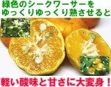 【生産量稀少】沖縄やんばる産フルーツシークワーサー3kg【発送時期12月中旬〜1月末】
