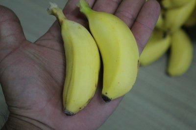 画像1: ≪週末セール特価≫沖縄の島バナナ約1kg 【発送期間7月頃】