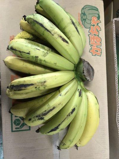 画像2: ≪早いもの勝ち!!≫甘いバナナ・沖縄県産三尺バナナ2kg 【配達日指定不可】