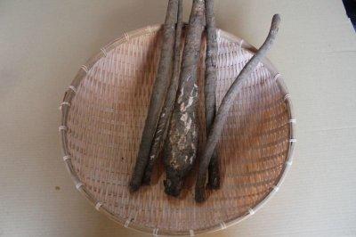 画像1: 植物繊維たっぷり柔らかい 訳あり【島ごぼー1Kg】煮物料理にも最適
