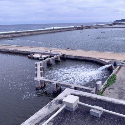 画像1: 久米島の活〆急速冷凍車えび 4箱 送料無料 (12/25〜1/5発送不可)久米島から直送のため、他の商品と同梱不可