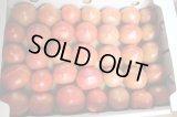 沖縄野菜 真和志産水切りフルーティ トマト 約3〜4kg 発送は3月〜4月【配達日指定不可】