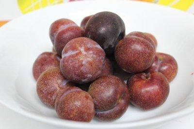 画像1: 【発送6月中旬〜6月末ごろ】甘酸っぱい初夏の果実 沖縄県産すもも5kg メルマガ会員は割引(20%)あり。
