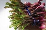 ≪紫品種≫沖縄県産 島らっきょう 1kg 大きくて、辛みもあり香りも強いので塩漬けに、天ぷらに最適!15kg限定