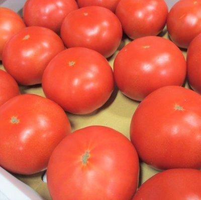 画像2: 沖縄野菜 トマト約4kg サイズ指定なしS〜3L