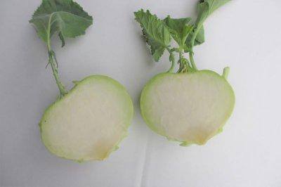 画像1: 【初入荷につき半額】沖縄県産 コールラビ 緑 約500g(2〜3個) キャベツの仲間クセがなく食べ方自在