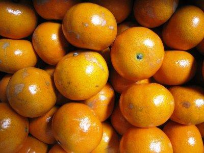 画像3: 【予約開始】沖縄産みかん 「マーコット」 3kg 数量限定 【発送は1〜3月頃】タンゴール