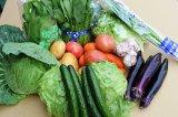 沖縄の旬の野菜セット5種類