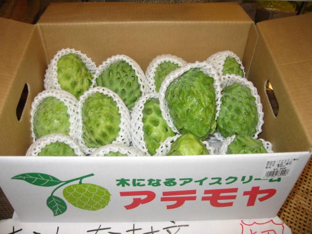 画像1: 【訳あり】沖縄県産アテモヤ 約1kg(3〜6個)とってもあま〜い山のアイスクリーム【発送時期11月〜3月】【配達日指定不可】 (1)