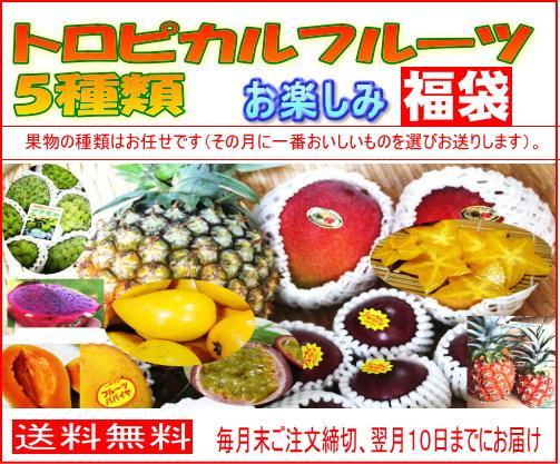 画像1: 【送料無料】お任せトロピカルフルーツフルーツお楽しみ福袋(5種類セット)【6か月頒布会】 (1)