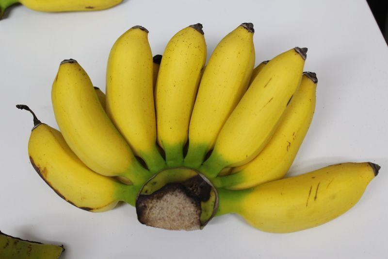 画像1: ≪週末セール特価≫沖縄の島バナナ約2kg 【発送期間7月頃】 (1)
