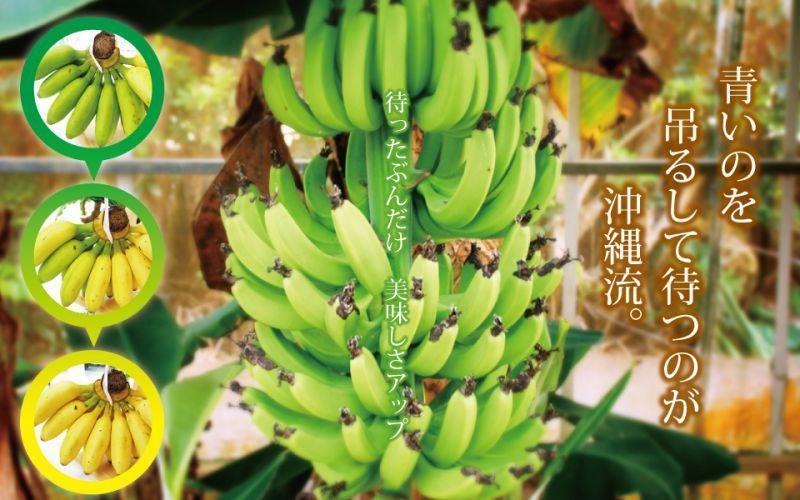 画像1: 沖縄のゴールデンスウィートバナナ約2.5kg 発送は5月〜【配達日指定不可】 (1)