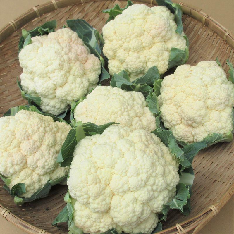 画像1: 沖縄野菜 訳ありカリフラワー 3個 (1)