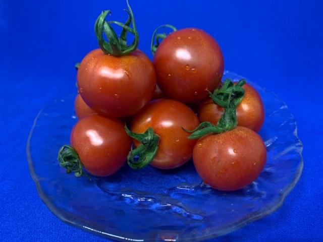 画像1: 沖縄産 ミディアムトマト  たっぷり 1kg フルティカトマト【配達日指定不可】 (1)