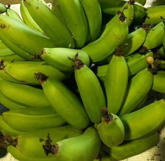 画像1: ≪早いもの勝ち!!≫甘いバナナ・沖縄県産三尺バナナ2kg 【配達日指定不可】 (1)