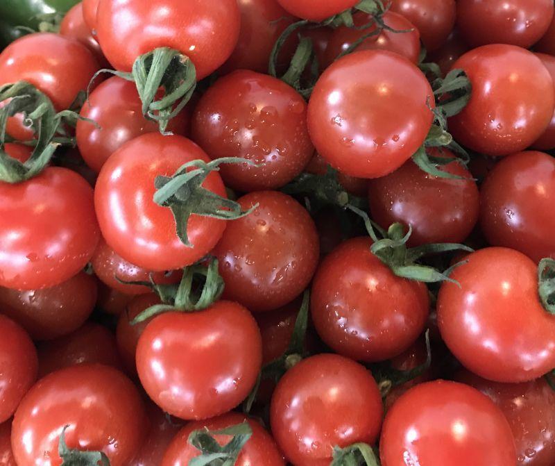 画像1: 【沖縄のプチトマト今が旬】沖縄産ミニトマト150g×5パック (1)
