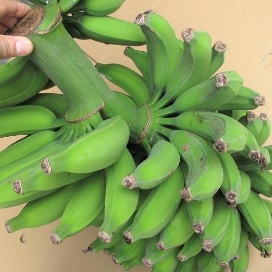 画像1: 再入荷!10セット限定 沖縄のバナナ・ゴールデンスウィート 合計約3kg 会員さまは更に10%割引 (1)