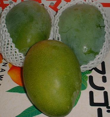 画像1: 【送料無料/訳あり】沖縄県産キーツマンゴー 1.5kg (1〜3玉)【発送時期7月下旬〜9月】【配達日指定不可】【メルマガ会員割引】(幻のグリーンマンゴー) (1)