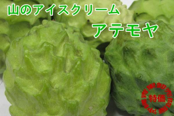 画像1: 【お試し】沖縄県産アテモヤ 約500g(1〜5個)とってもあま〜い山のアイスクリーム【発送時期11月〜3月】【配達日指定不可】 (1)