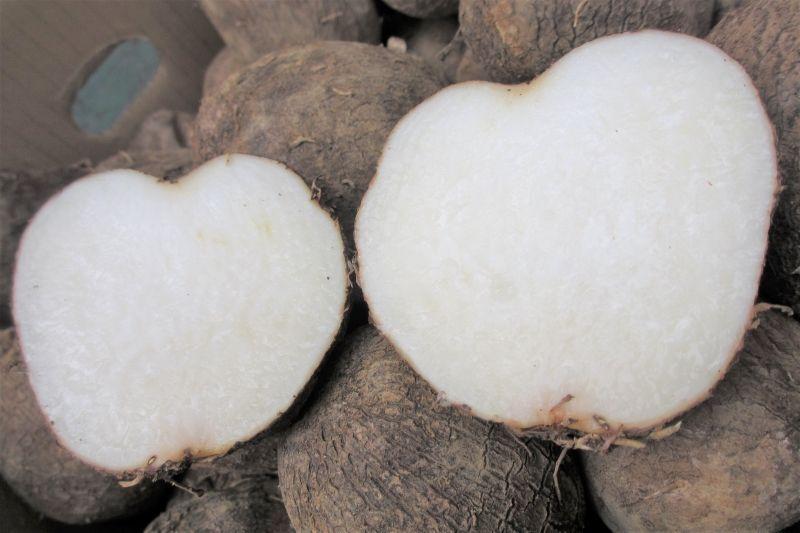 画像1: 希少品種再入荷しました! ヤムイモ 3kg 長生きすると言われるDHEAが含まれる。バストUPに?会員さまは10%割引き! (1)
