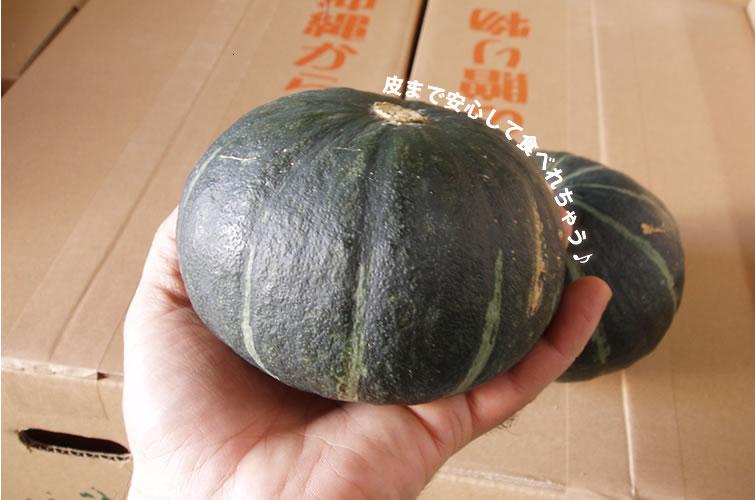 宮古島産のかぼちゃ野菜販売。