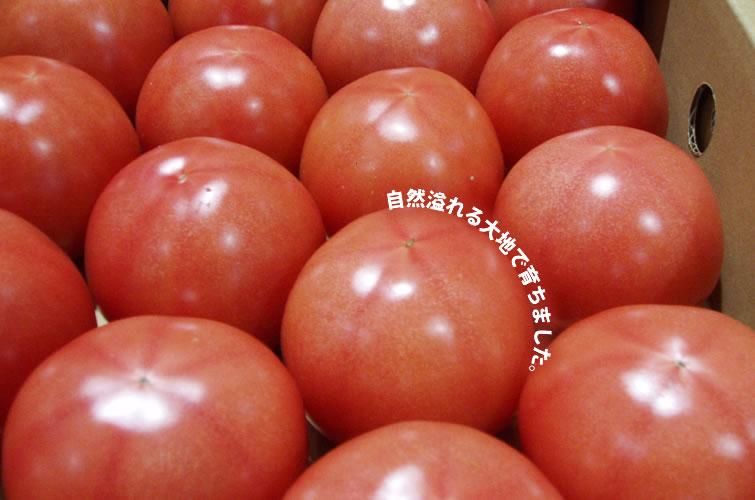 沖縄野菜トマト
