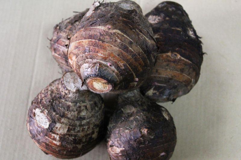 画像1: 沖縄県産 里芋 2kg (親芋) (1)